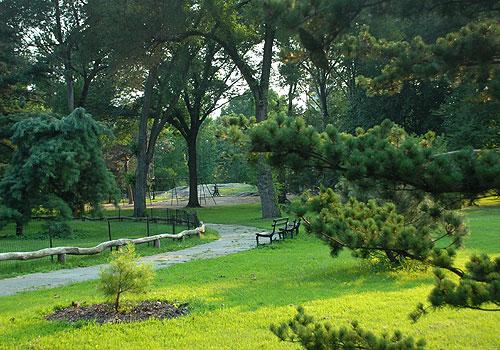 Central Park - Arthur Ross Pinetum